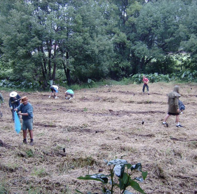 2016 Stage 2 All Souls Planting